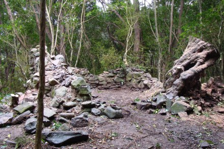 Stone ruin after completed vegetation removal