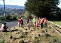 Polytechnic students planting trees