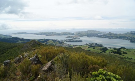 Peninsula from Mt Cargill