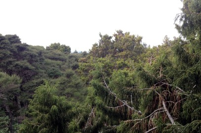 View across the canopy