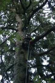 Student in the canopy