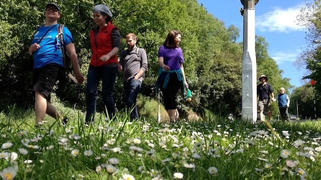 Walkers on organised Society traverse of Town Belt
