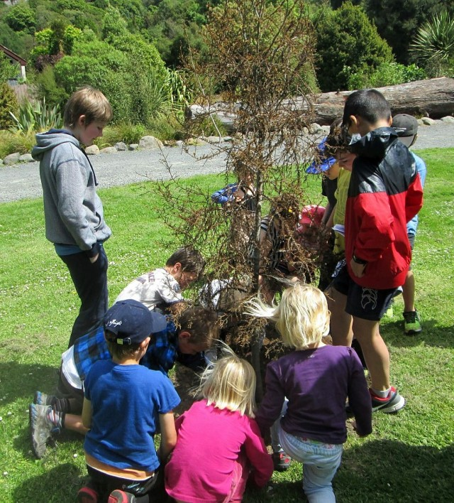 Planting of the anniversary Kahikatea tree