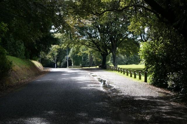 Queens Drive - Dunedin Town Belt