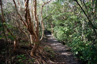 Forest walk - Craigieburn