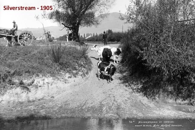 Silverstream 1905